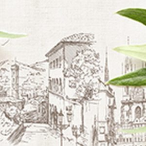 Итальянская олива