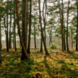 Пробуждение леса