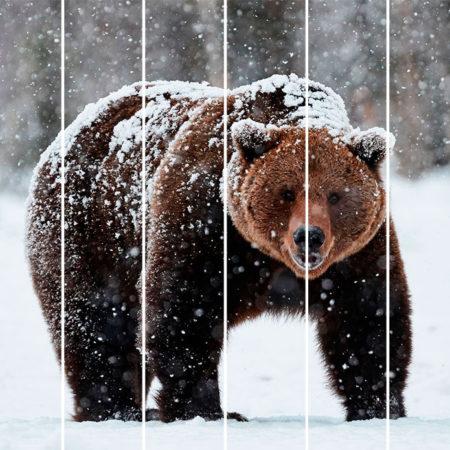 Kartini na doskax medved
