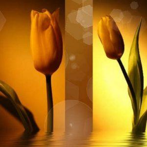 Золото в тюльпанах